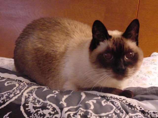 Tanya S Comprehensive Guide To Feline Chronic Kidney